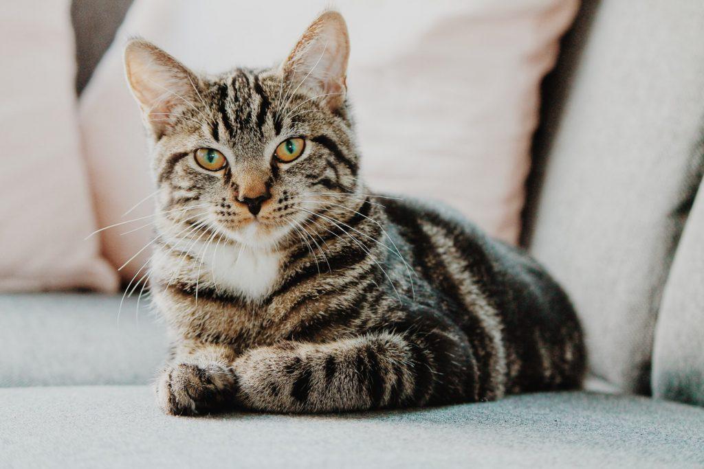 Ist der internationale Tag der Katze auch bei deinem Marketing-Kalender dabei?