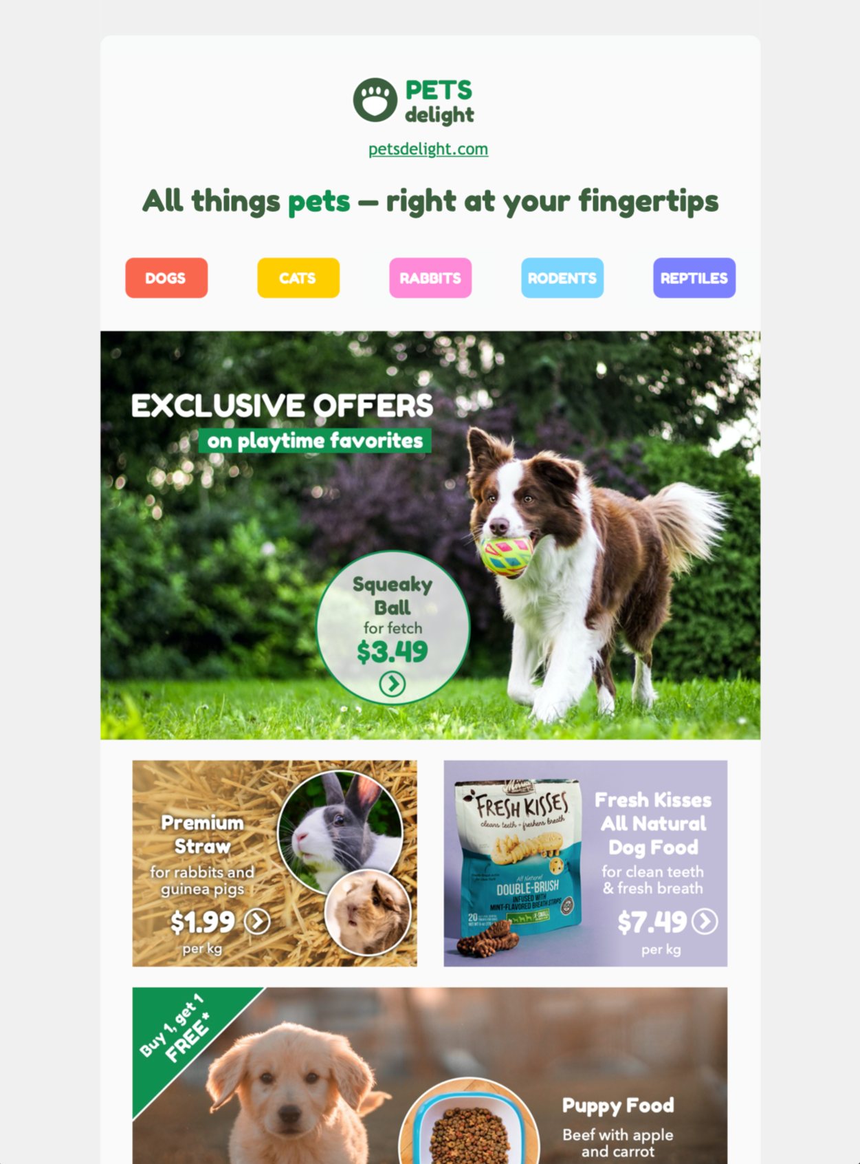 pet shop and animal care themed email template